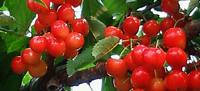 季節の果実その1